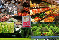 Marketing and Value Chain Management in Agriculture